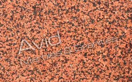 Classic Red Granite Suppliers from India
