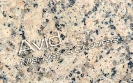 Panther Yellow Granite Suppliers from India